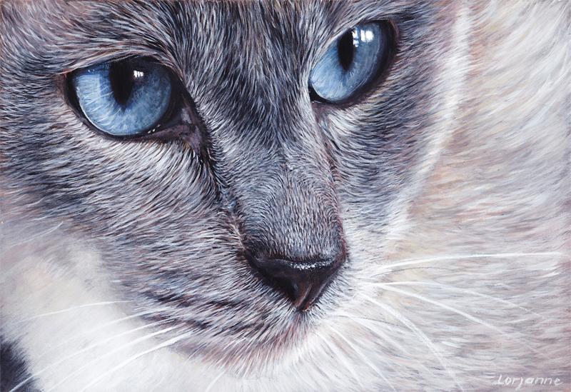 Peintre Animalier Chat #5: Chat-yeux-doux