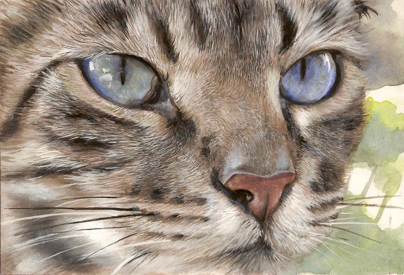 Peintre Animalier Chat #14: Laure Simonin Peintures U2013 Mon Portfolio